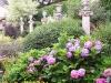 Jardin florentin, pergola 01