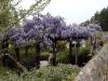Jardin florentin, pergola 06