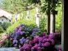 Jardin florentin, pergola 12
