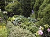Jardin florentin, hostas 02