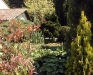 Jardin florentin, hostas 04