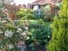 Jardin florentin, hostas 05
