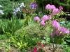 Jardin florentin, hostas 06