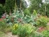 Jardin florentin, hostas 07