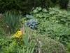 Jardin florentin, hostas 10