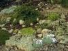 Grande rocaille 01