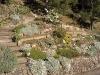 Grande rocaille 16