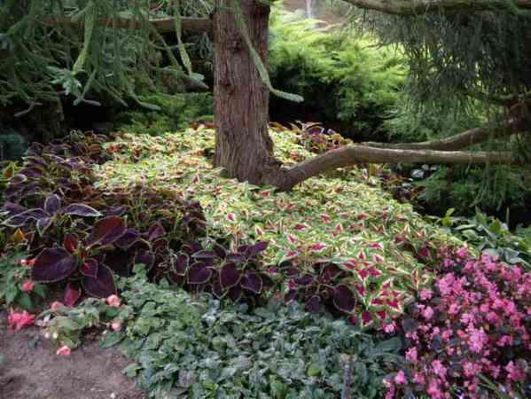 Les jardins du gu le petit talus - Plante de talus ...