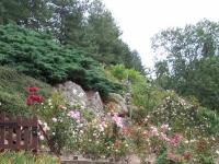 roseraie_partie-basse05