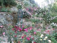 roseraie_partie-basse06