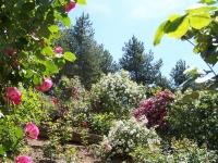 roseraie_partie-en-terrasses02