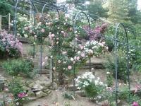 roseraie_tonnelle03