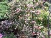 roseraie_partie-en-terrasses03