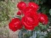 Centenaire de Lourdes rouge