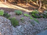 Sentier pinède 2