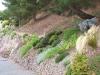 Sentier pinède 5
