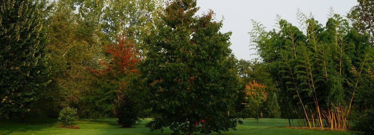 Le petit arboretum