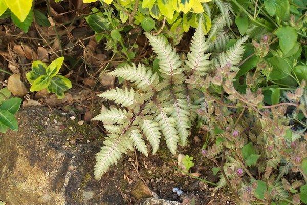 Les jardins du gu encyclop die des plantes for Encyclopedie plantes interieur