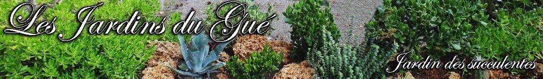 Bandeau-Succulentes-Site