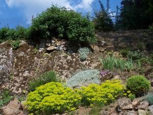 Le rosier sur le rocher