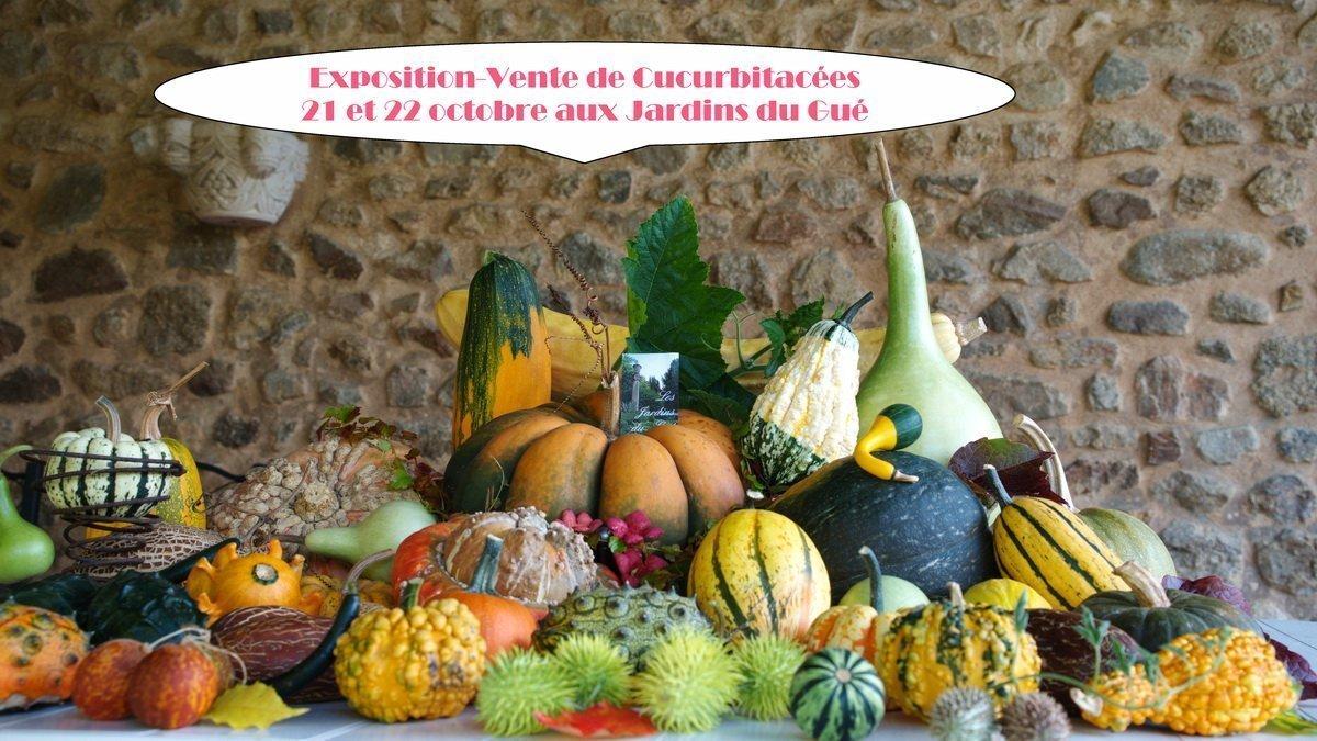 Exposition-vente de Cucurbitacées