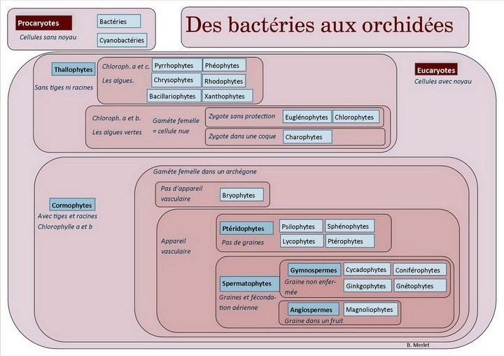Des-bactéries-aux-orchidées9