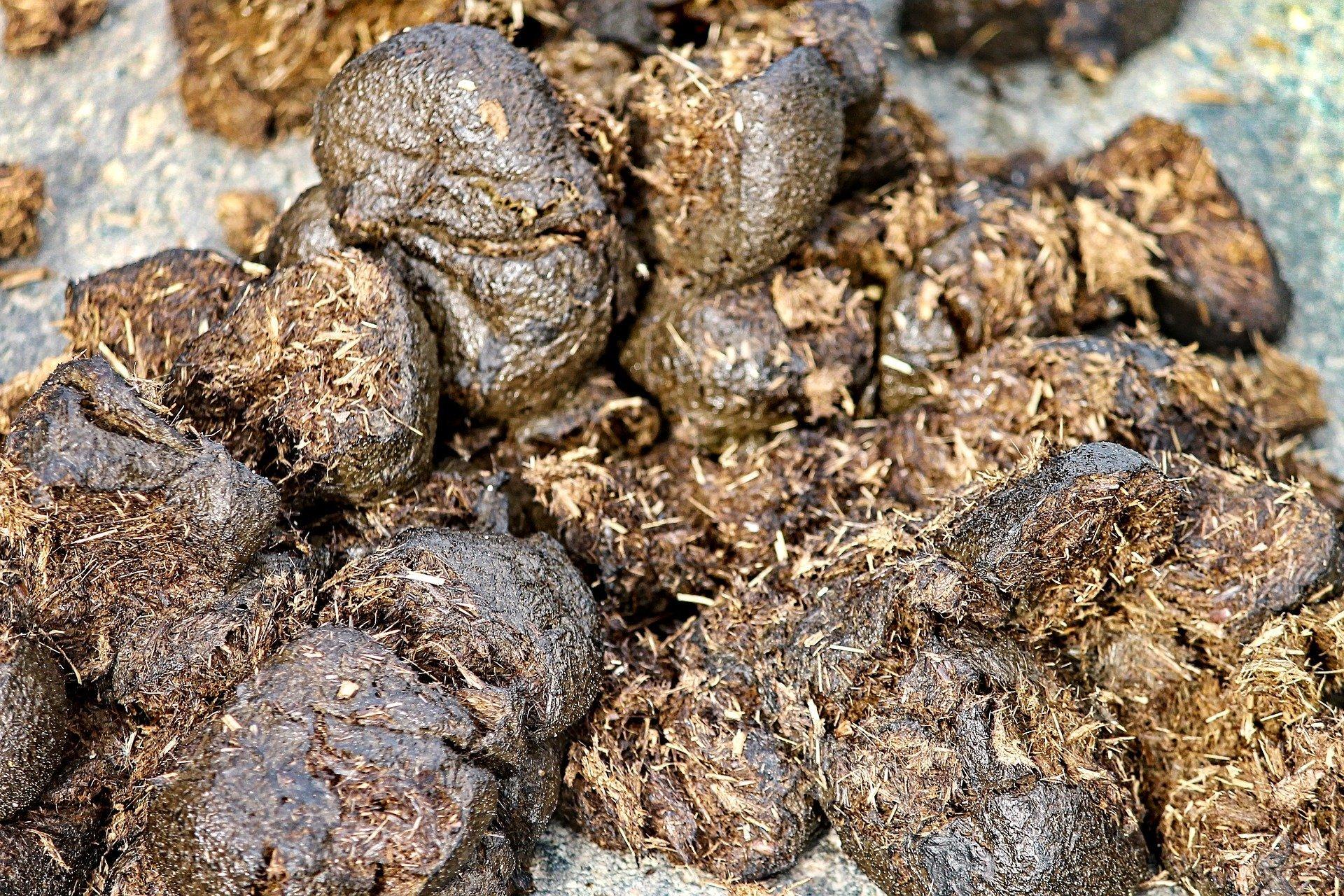 Engrais organique – crottin de cheval