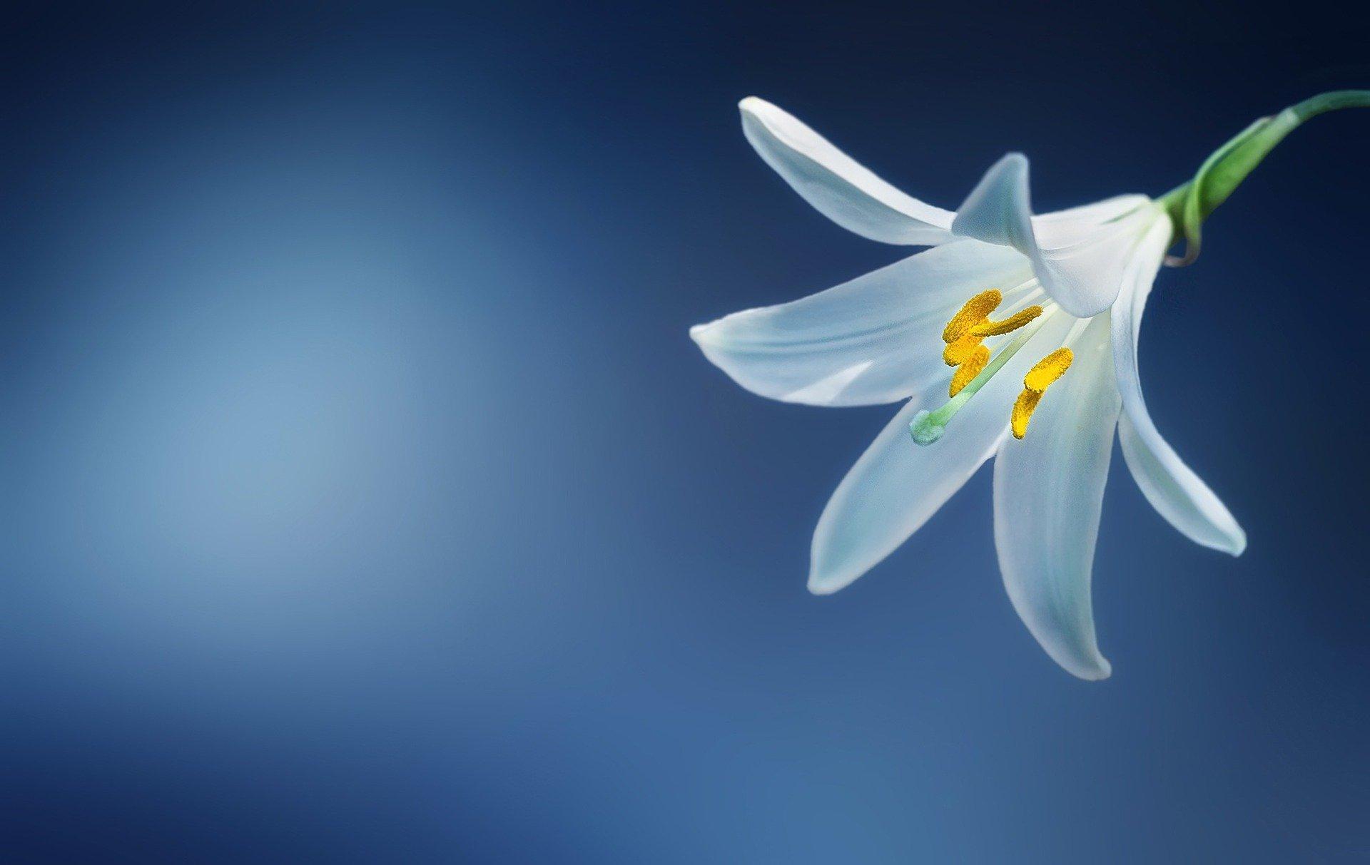 Fleur – les pièces florales