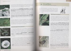 Extrait concernant sauterelles et grillons