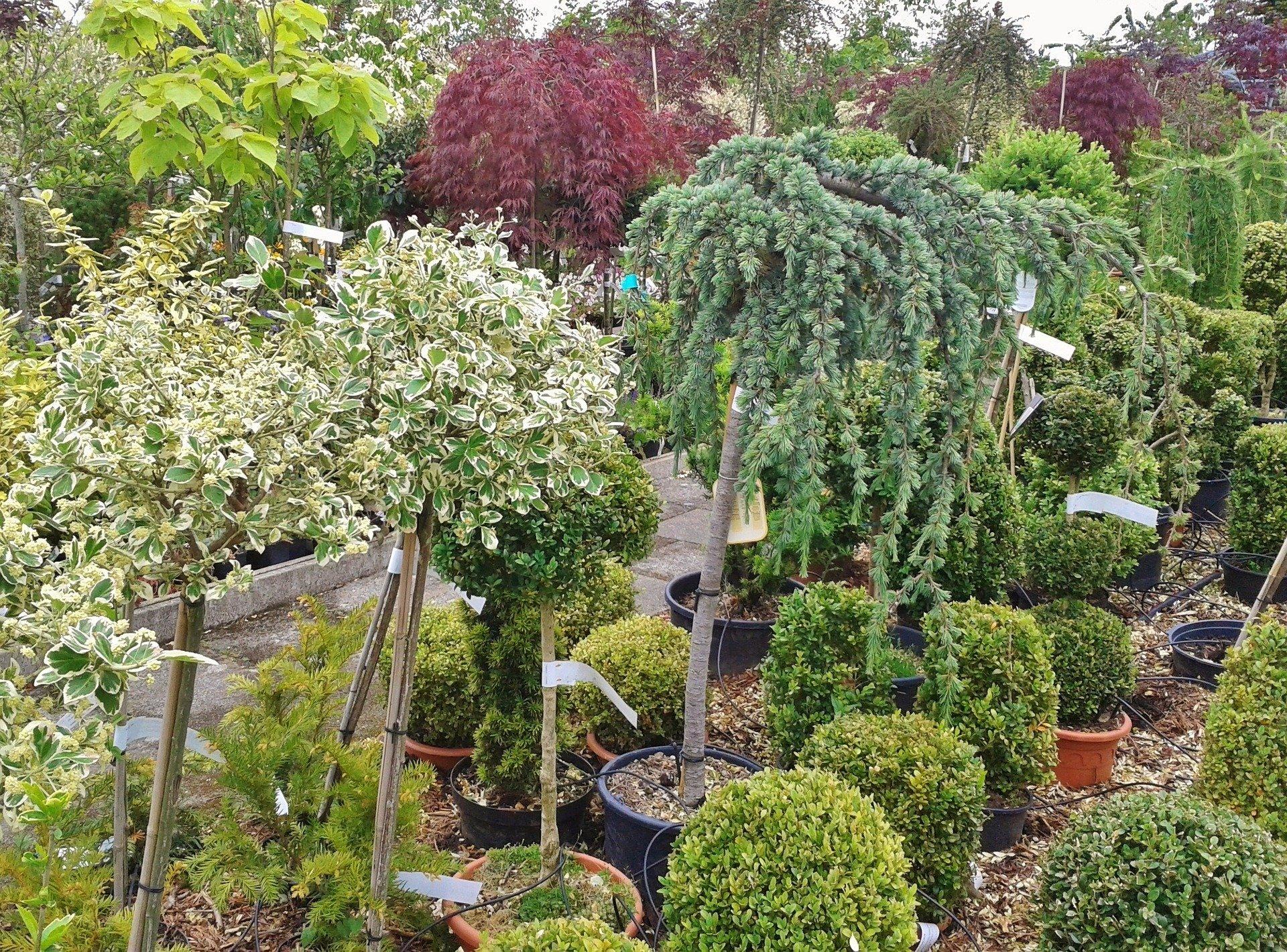 Pépinière – achat de plantes