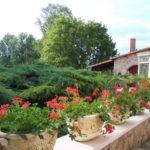 Pelargonium 'Roi des balcons'