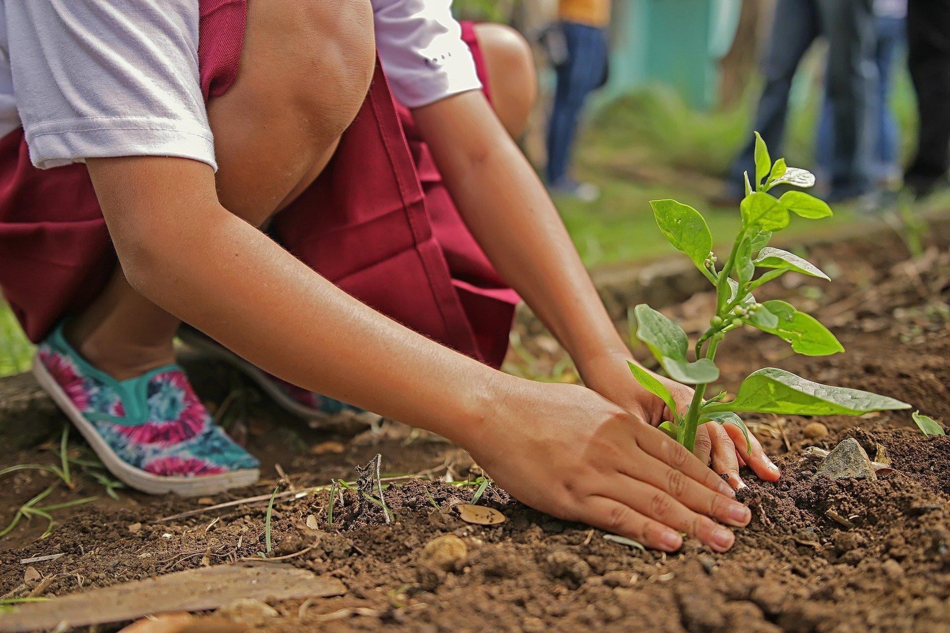 Planter – réussir ses plantations