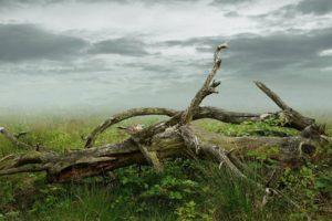 Le bois mort