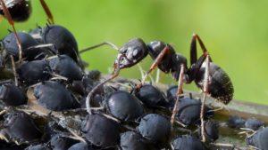 Maitriser les insectes indésirables